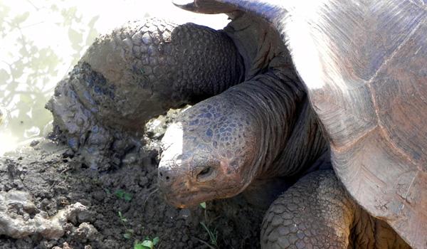 turtle2600