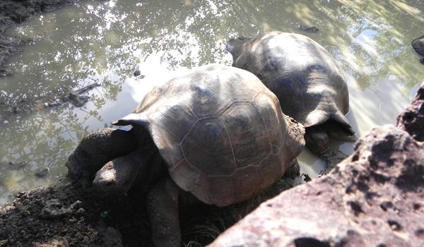 turtle4600