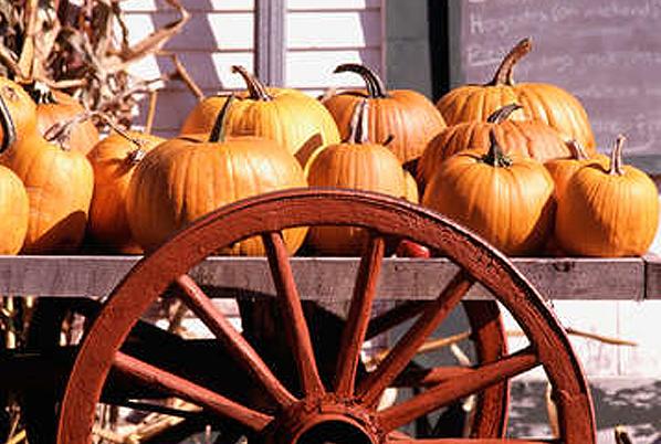 #2:  Visit a pumpkin patch