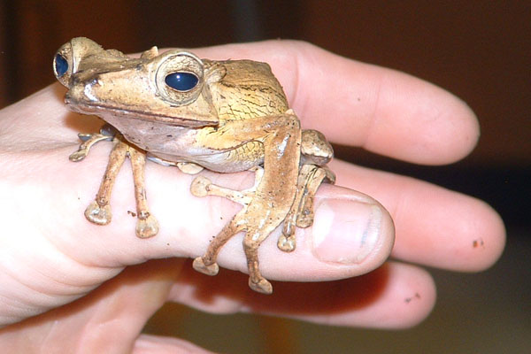 Endangered amphibians meet Zoology students