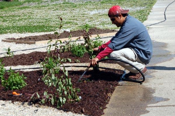SLIDESHOW:  Students, teachers plant RB community garden