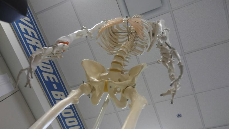Science department welcomes new Anatomy and Physiology course