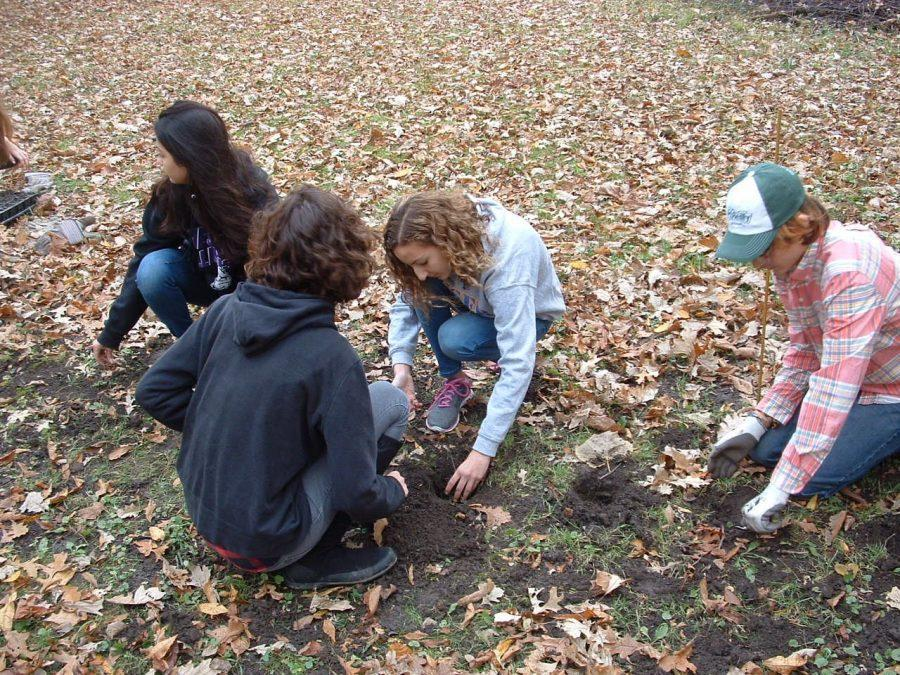 Ecology club: Workday at Waubansee Woods