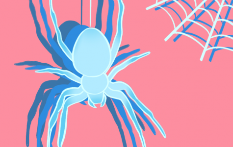 Spiders: They are not an irrational fear
