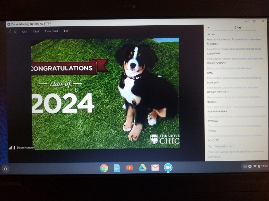 UChicago's dean of admissions' dog, Patches, during their Welcome Class of 2024 online event.