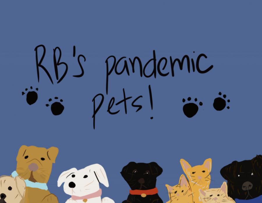 RB's Pandemic Pets
