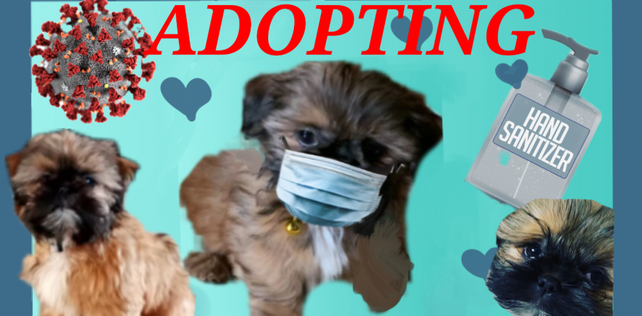 Adopting A Dog From A breeder During The Pandemic