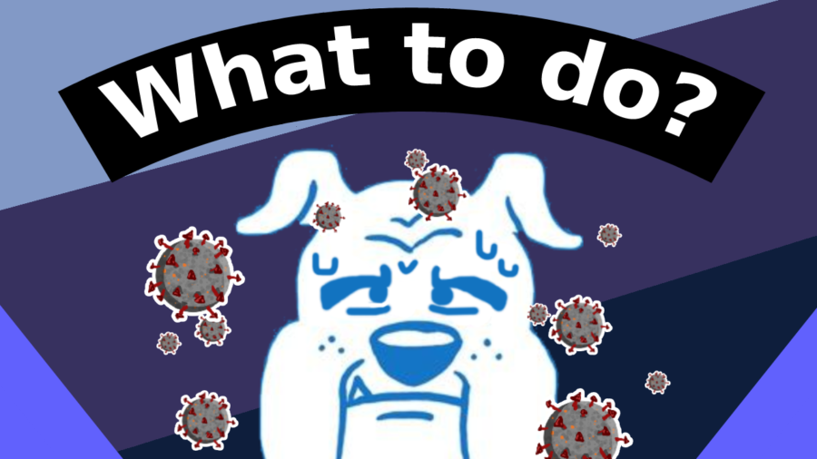 The question sparks: What happens if a Bulldog gets COVID?